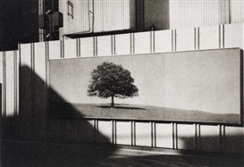 Nathan Lyons, Untitled (Tree mural)