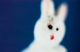 Artwork by Larry Gianettino, White Rabbit, Made of cibachrome