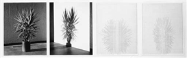 Charles Gaines, Set of 4 Works: Shadows VII