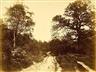 Eugène Cuvelier, Voie carrossable dans la forêt