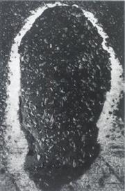 Artwork by Tom Sandberg, Uten tittel 1986, Made of Photograph
