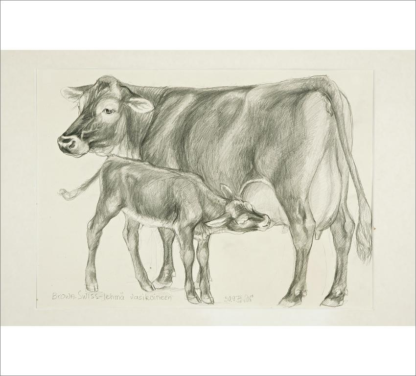 calf drawn images reverse search