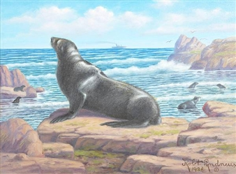 California Sea Lion By Robert Lindneux ,1928