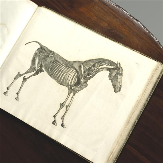 Stubbs George The Anatomy Of The Horse Including A Particular