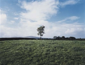 Artwork by Paul Graham, Union Jack Flag in Tree, Country Tyrone, Made of C-print.