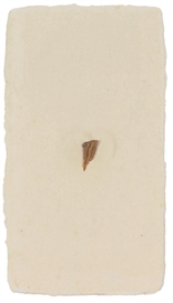 Artwork by Tom Marioni, Untitled (Duchamp Relic), Made of wood fragment on paper