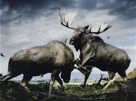 Artwork by Simen Johan, Untitled #133 (Moose) from Until the Kingdom Comes, Made of Color coupler print, Diasec mounted.