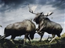Simen Johan, Untitled #133 (Moose) from Until the Kingdom Comes
