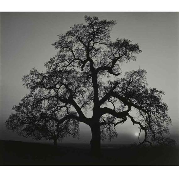 Adams Ansel | 'OAK TREE - SUN' | MutualArt Ansel Adams Clearing Winter Storm Analysis