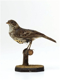Artwork by Kelly McCallum, Unique Victorian taxidermied bird sculpture, Made of Taxidermied Victorian bird, 18 carat gold-plated metal maggots, wood