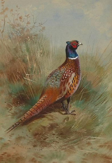 Cock and pheasant