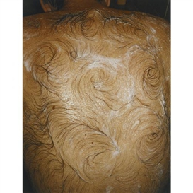 Artwork by Mona Hatoum, Van Gogh's Back, Made of c-print