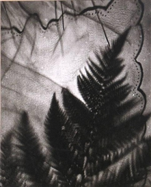 Artwork by Edmund Teske, Untitled (Composite: Leaf and handkerchief), Made of Gelatin silver print