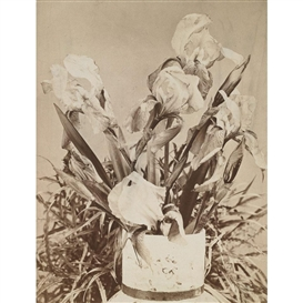 Artwork by Louis Comfort Tiffany, VASE WITH IRISES, Made of Albumen print mounted on green card