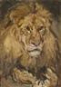 Carl Fahringer, Lion