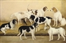 H. Young, Favourite hounds with a favourite terrier