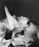 Horst P. Horst, Birthday Gloves, New York