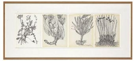 Artwork by Merce Cunningham, Untitled Quartet (all pages: Plants and Roots), Made of ink on paper