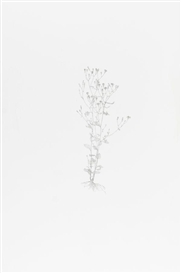 Artwork by Michael Landy, Nipplewort (From Nourishment), Made of etching