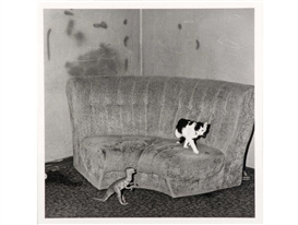 Artwork by Roger Ballen, Sitting Room, from the Shadow Chamber series, Made of black and white photograph, selenium-toned archival print on Ilford 24K Silver Gelatine paper