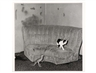 Roger Ballen, Sitting Room, from the Shadow Chamber series