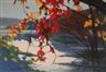 Tadashi Asoma, Cascading leaves