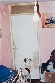 Richard Billingham, Untitled (NRAL 8)