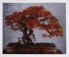 Ellen Brooks, BONSAI