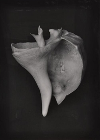 Artwork by Peter Campus, SIREN, Made of Gelatin silver photograph