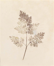 Artwork by William Henry Fox Talbot, 13 plates: The Pencil of Nature, Made of Salted paper prints
