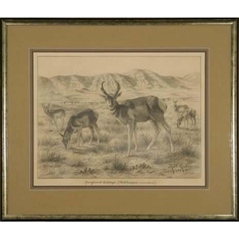Pronghorned Antelope (Antiloeapra Americana) By Robert Lindneux ,1926