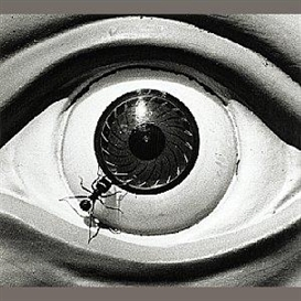 Artwork by David Wojnarowicz, Untitled (Ant and Eye), Made of Gelatin silver print