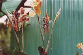 Artwork by William Eggleston, 'Flowers', Made of chromogenic prints