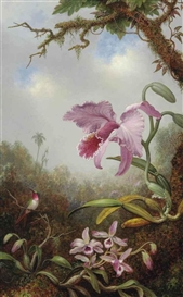 Artwork by Martin Johnson Heade, Hummingbird and Two Types of Orchids, Made of oil on canvas