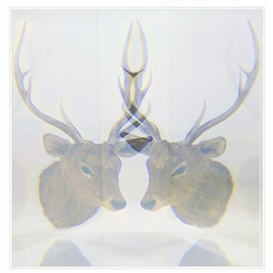 Artwork by Kohei Nawa, PIXCELL[DEER], Made of mixed media