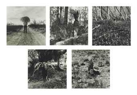 Simryn Gill, Vegetation: a set of five photographs