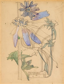 Artwork by Charles Rennie Mackintosh, Chickory, Made of pencil and watercolour
