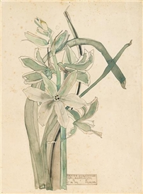 Artwork by Charles Rennie Mackintosh, Grass Hyacinthe, Made of pencil and watercolour