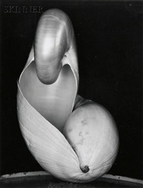 Artwork by Edward Weston, Shell, Made of Gelatin silver print on paper