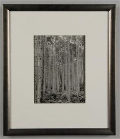 Artwork by Todd Webb, Aspens, Made of gelatin silver print
