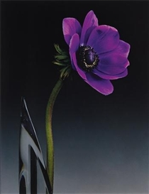 Artwork by Robert Mapplethorpe, Anemone, Made of Dye transfer print
