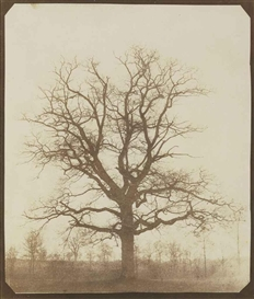 Artwork by William Henry Fox Talbot, Oak Tree in Winter, Made of salted paper print from a calotype negative