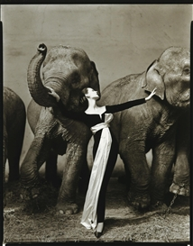 Artwork by Richard Avedon, Dovima with elephants, evening dress by Dior, Cirque d'Hiver, Paris, Made of Gelatin silver print