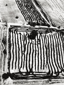 Artwork by Mario Giacomelli, UNTITLED, FROM THE SERIES ,,PRESA DI COSCIENZA SULLA NATURA, Made of Later gelatin silver print. Agfa-Paper