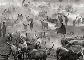 Artwork by Sebastião Salgado, SUD-SOUDAN (DINKA CATTLE HERD IN AMAK), Made of Gelatin silver print