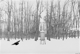 "Artwork by Robert Häusser, ""Vogel im Park"", Made of Gelatin silver print"