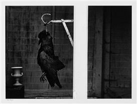 "Artwork by Robert Häusser, ""Toter Vogel"", Made of Gelatin silver print"