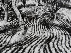 Artwork by Mario Giacomelli, Marzo, Presa di coscienza sulla natura, Made of Gelatin silver print