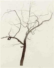 Artwork by Roxy Paine, Untitled, Made of ink and graphite on paper