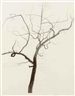 Roxy Paine, Untitled